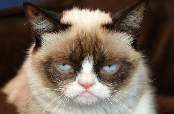 9 Quotes that Prove Architects are Basically Grumpy Cat