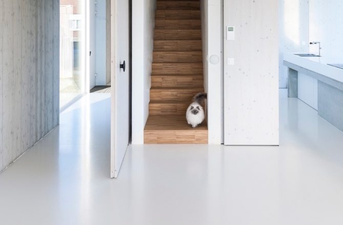 Stealing the Show: Cats in Architectural Photography