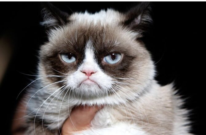 10 Quotes that Prove Architects are Basically Grumpy Cat